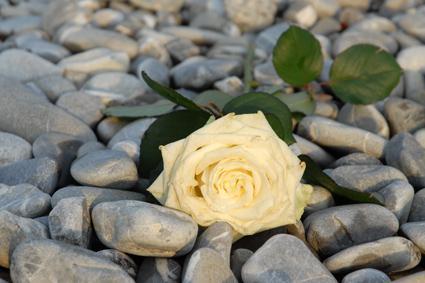 (P)rose