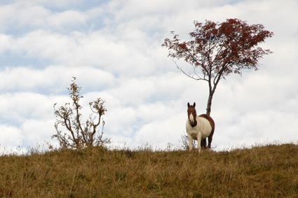 Cloudy horse